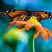 Butterflies-209