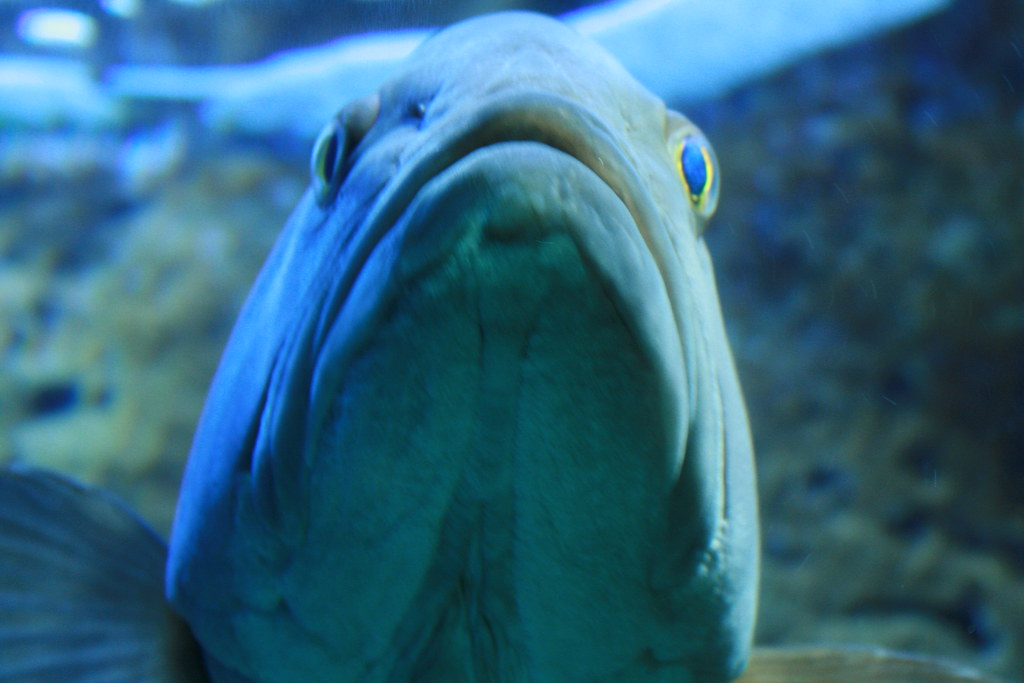 Cretaquarium Crete : Cretaquarium Thalassocosmos Crete Aquarium, Sept 2010 Flickr