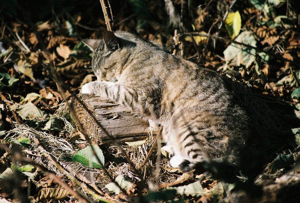 Cat Sleeps On Your Back
