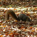 Squirrels on Campus at University of Michigan