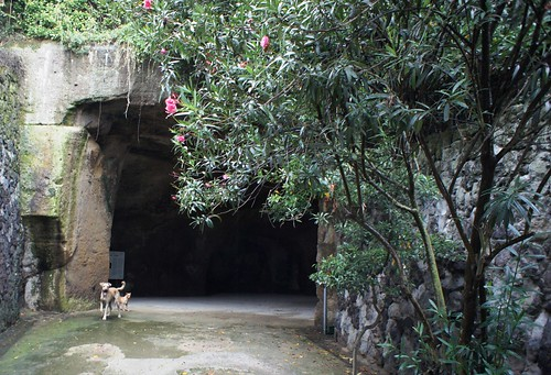 Cumae hound of the Sybilline caves. The dog drew me along, barked and snuffled at cave entrance and howled above it, awaited me and led me inside | by Ahala
