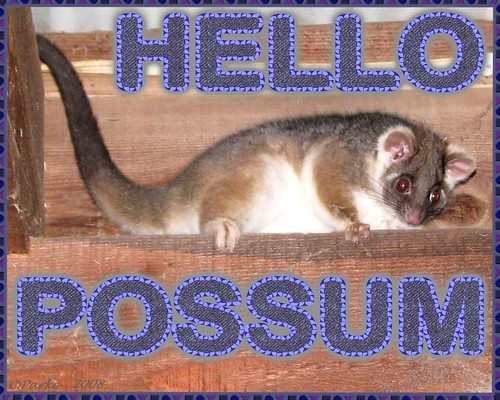 eCard: Love & Friendship - HELLO POSSUM | by you get the picture