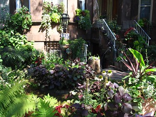 Greenest Block In Brooklyn Finalist | by Brooklyn Botanic Garden
