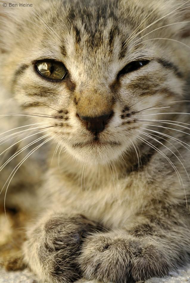 Abandoned Cat - 2 | © Ben Heine || Facebook || Twitter