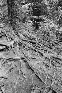 Roots | by Fabrizio Zago - Photography and media