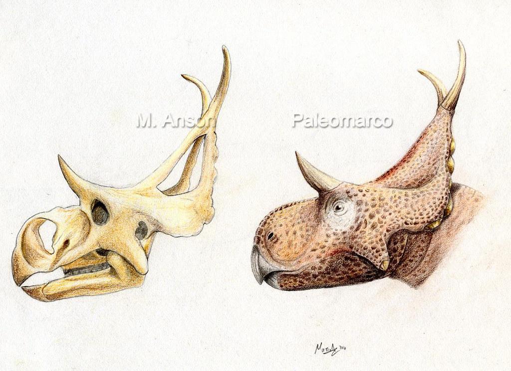 Diabloceratops Head /cráneo | Reconstrucción de la cabeza de… | Flickr