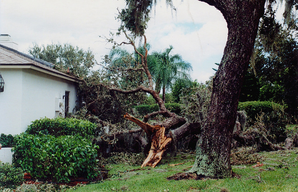 Sarasota Oak Tree Down in Tropical Storm Gabrielle 2001… Flickr
