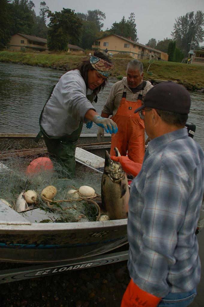 Tribal fishermen on the nisqually tribal fishermen land for Nisqually river fishing report