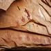 The Quail Panel ~ Cedar Mesa