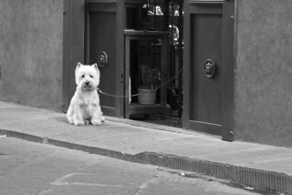cane da guardia | by g_u