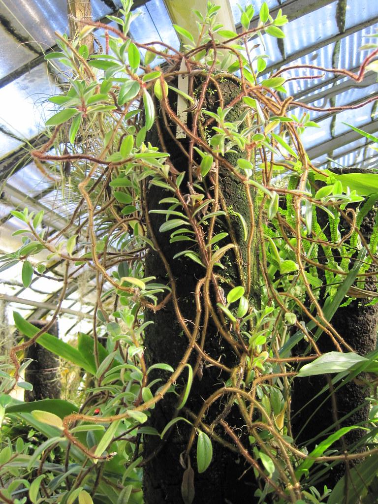 Jardin des plantes de nantes plantes dans l 39 aile est du flickr for Jardin des plantes nantes de nuit