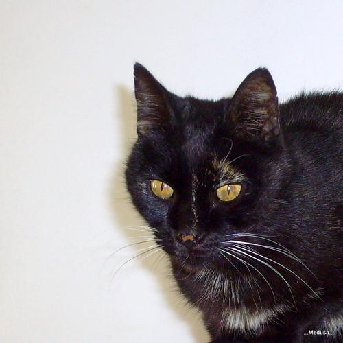 Une sexy black crache du sperme par la chatte - salope noire