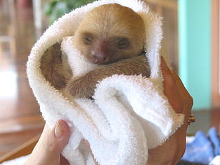 Baby sloth | by Kymberlie R. McGuire