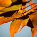 wallpaper: fall color