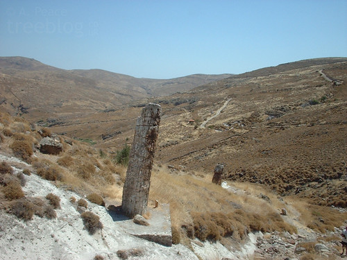 050803-petrified-forest-lesvos-6 | by treeblog
