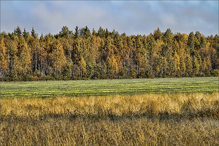 Swedish Field | by wine_scribbler