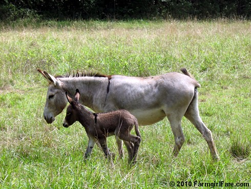 Daphne and Her New Baby 1 | by Farmgirl Susan
