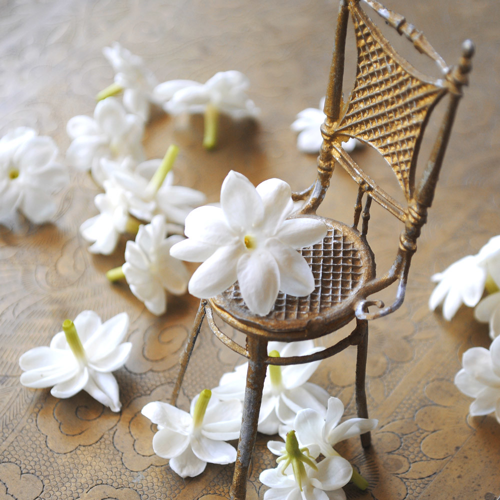 Jasmine Flowers With Chair Jasmine Sambac Flowers From My Flickr