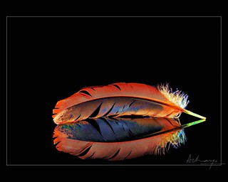 Feather & Reflection [#01] | by nna:2006