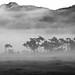 oze morning fog