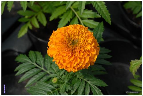 Fleurs de mon jardin 2 je vous remercie de vos visites for Mon jardin 3d