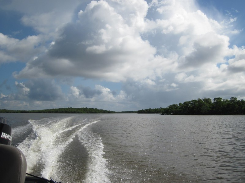 Mangrove Islands along Sandfly Pass