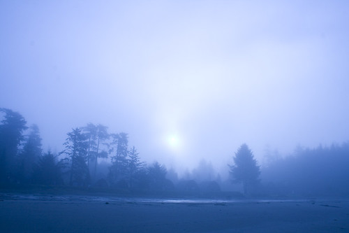 early morning fog | by fog and swell