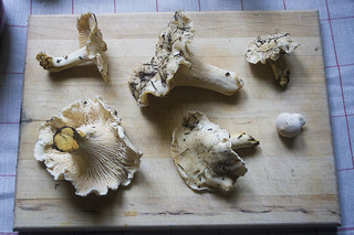 white chanterelles | by fog and swell