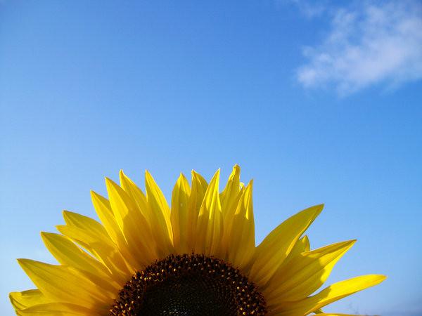 Bom Dia Sol: Bom Dia Flor Do Sol ♥