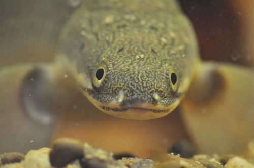 Emilio the Almost An-Eel-io gives his best Mona Lisa Smile in MAAACRO (yay for a new lens!) | by Colleen AF Venable