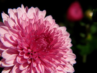 Pink In Honor Of Breast Cancer Awareness Month | by audreyjm529