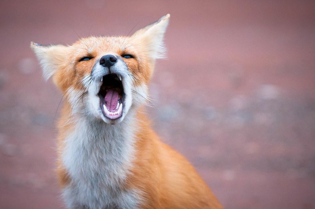 Fox Car Renta In Sky Arbor Airport