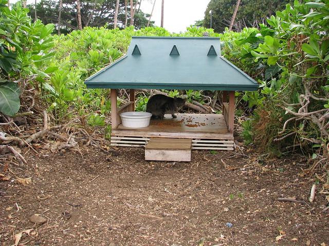 Cat Feeding Station Uk