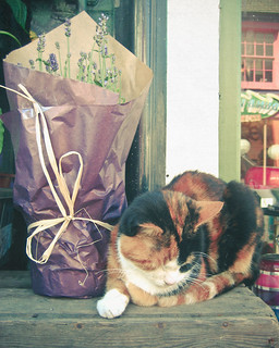 Cat and Lavender | by _cassia_