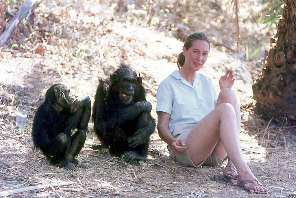 jane goodall the monkey lady essay Through detailed observations of tanzanian apes, jane goodall revolutionised our knowledge of chimpanzee behaviour, says robin mckie.