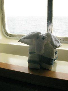283/365: no photo, but here's the towel elephant our steward made us | by rahest