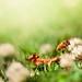 Macro / Nature / Grass