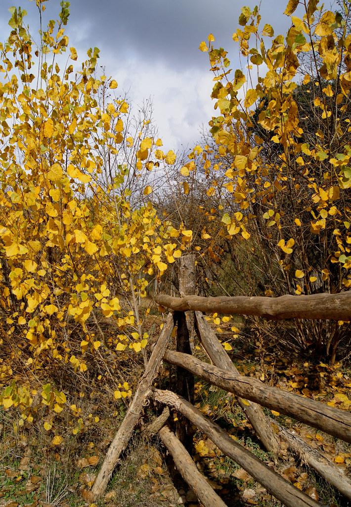 Cercado de madera parque natural de las lagunas de - Cercado de madera ...