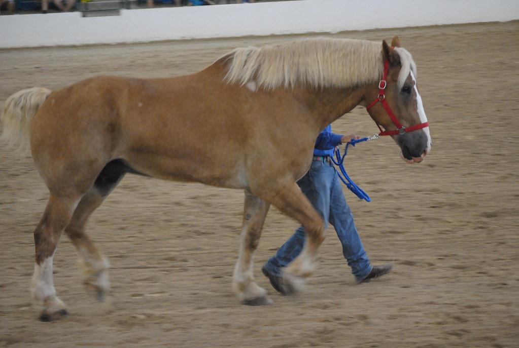BREYERFEST GUEST HORSE...