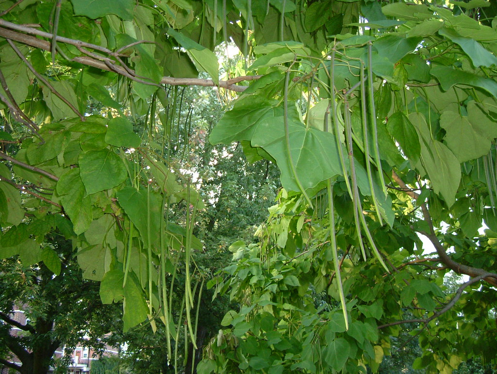 bean tree beans at rotherhithe tunnel south exit london. Black Bedroom Furniture Sets. Home Design Ideas