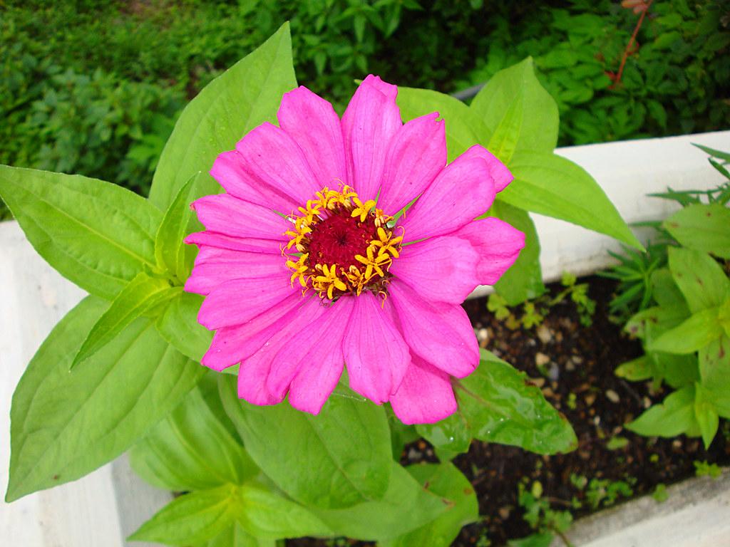 Flowers of India Flowers of India Devender Kumar