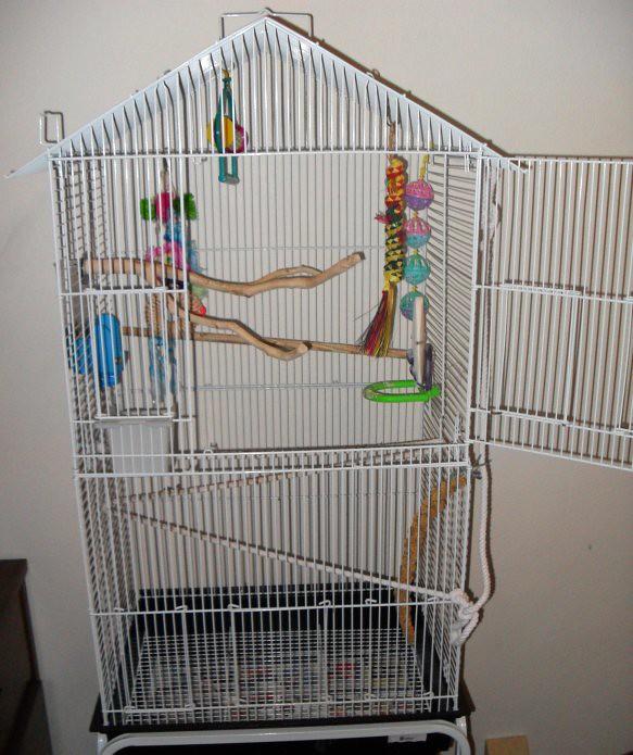 Kiwi's Cage