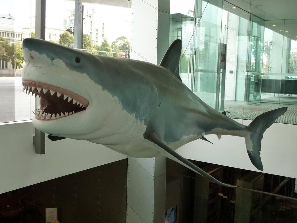 great white shark plastic sideview mel edwards flickr