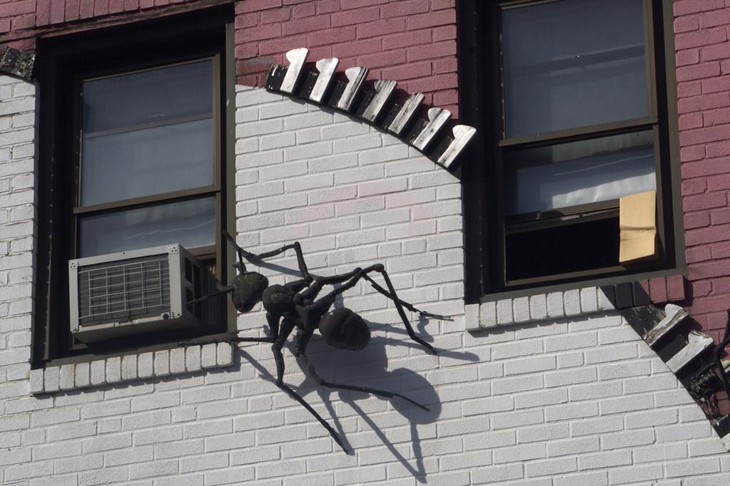 The Healthy Bug Natural Health Shoppe Halifax Ns