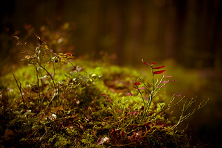 magic september forest #02 | by Pierre Pocs