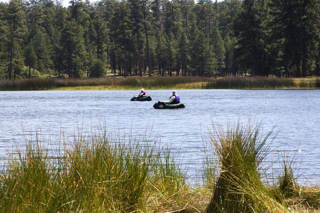 white horse lake campground williams ranger district