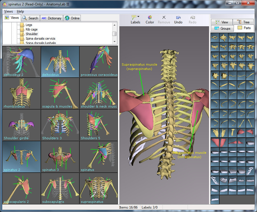 3d brain anatomy software