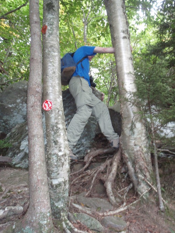 Me climbing on roots on a steep section of the Devil's Path as it heads up Twin Mountain from the notch