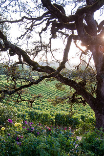 wine country | by Ryan Scott Photography
