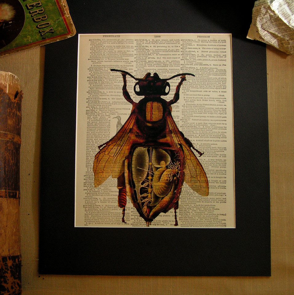 Anatomy Of A Honey Bee Vintage Print On Dictionary Page Flickr